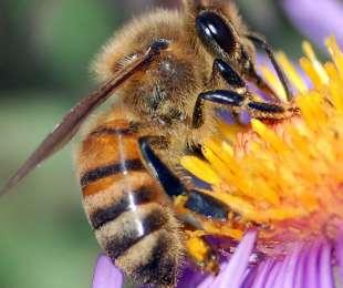 Relação das Abelhas com a Natureza